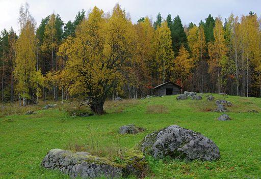 Tarhalahden_ahoa_Kolin_kansallispuistossa_Pielisen_rannalla (1)
