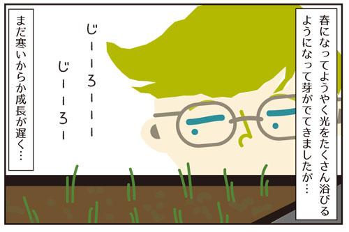 あれちゃんと植物。