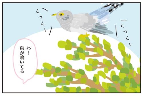 フィンランドの言い伝え?寿命がわかる鳥