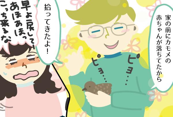 私が苦手なカモメの赤ちゃんを持って帰って来た夫【第2話】