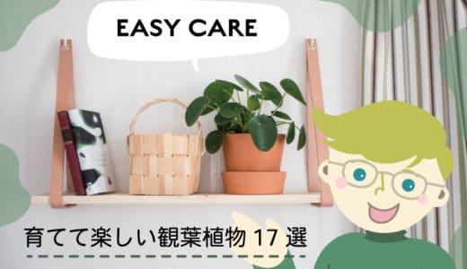 お家で簡単!育てるのが楽しいおしゃれな観葉植物17選【一人暮らしにもおすすめ】